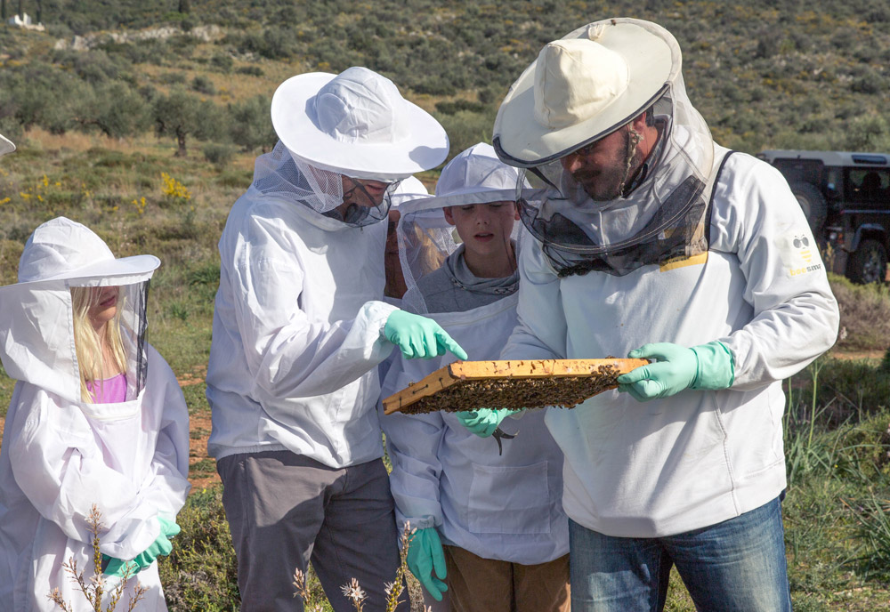 Wear the protective beekeeper's costume and meet the bees