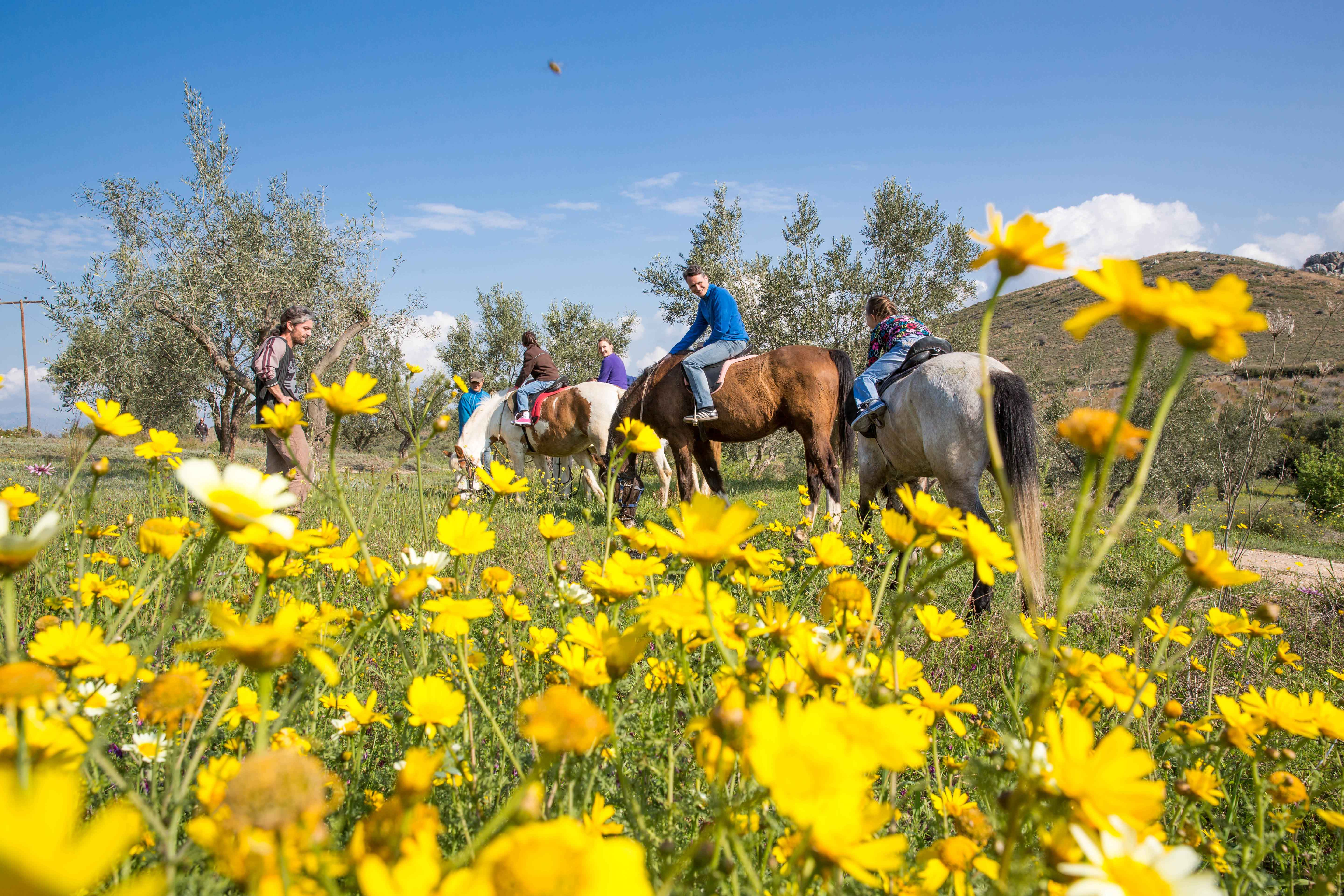 Visit marvelous landscapes up on a horse