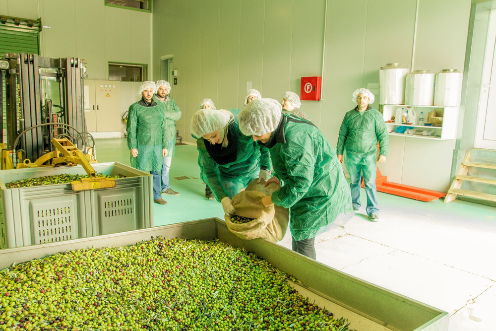 Olive oil processing in Nafplio